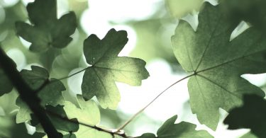 Grüner Lifestyle für Kinder und Erwachsene